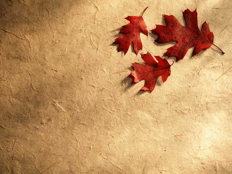 Autumn Or Fall Free Photographic Computer Desktop Wallpaper For Your