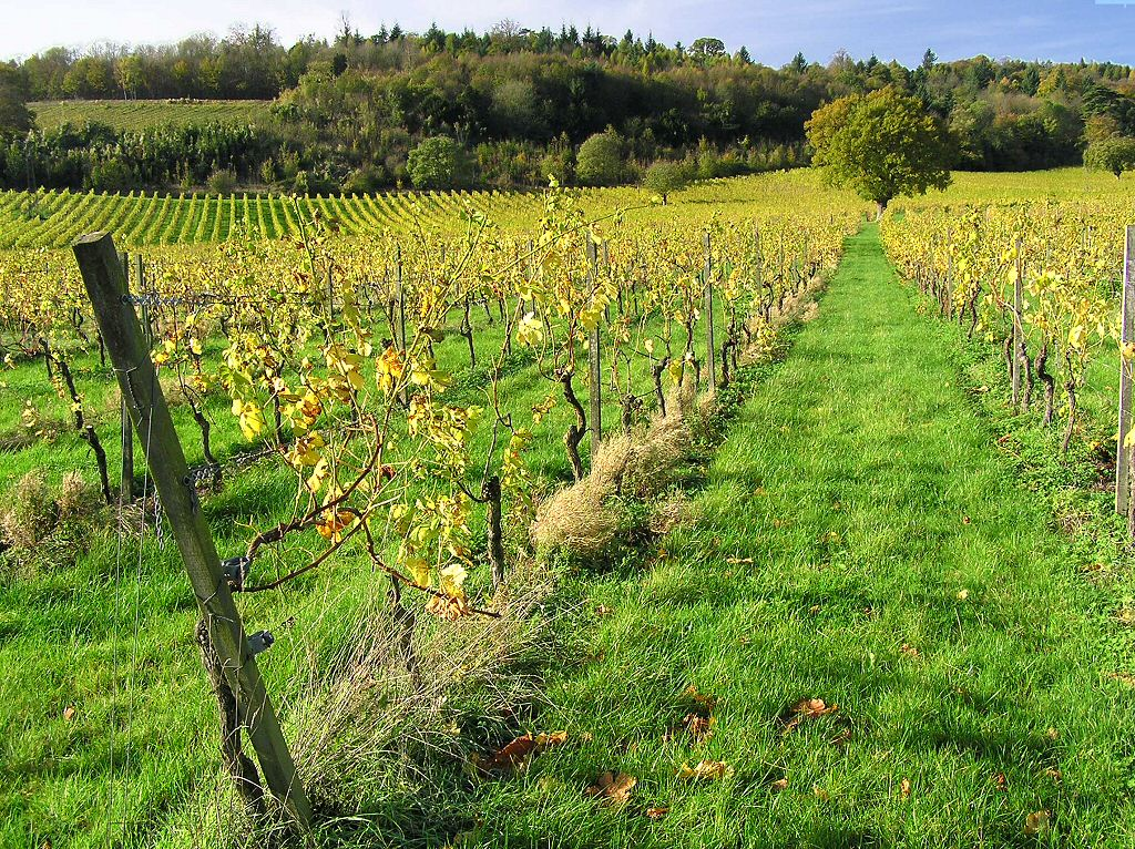 Free Wine Vineyard winery Wallpaper for your Computer Desktop background